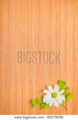 Green Branches Of Fern And Daisy Flower On Wooden Background