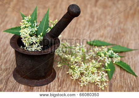 Neem Leaves And Flower On An Old Mortar