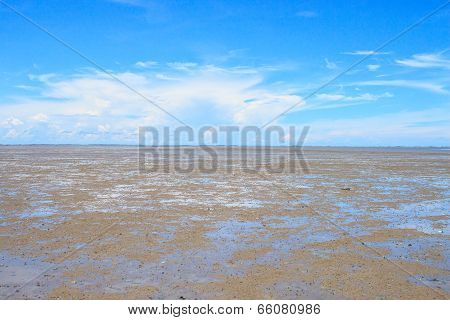 Mud Flats In The Bay
