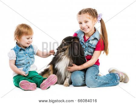 children playing with a dog breed sheltie on white background
