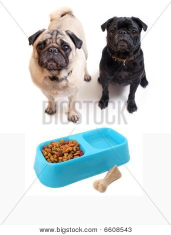 Pugs And Dogfood