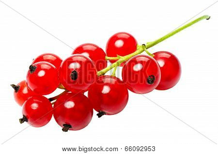 Red Currant Berries, Isolated On A White Background