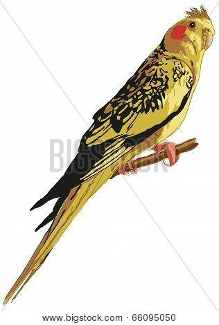 Mottled Yellow Cockatiel
