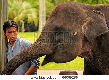 Mahout And Elephant At The Elephant Safari Park, Bali
