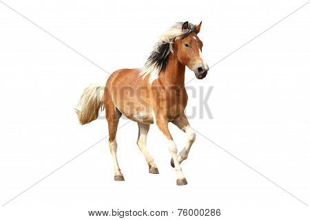 Skewbald Horse Galloping Free Isolated On White