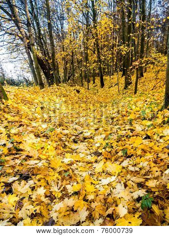 Ravine path in the forest covered with dead leaves in fall colors