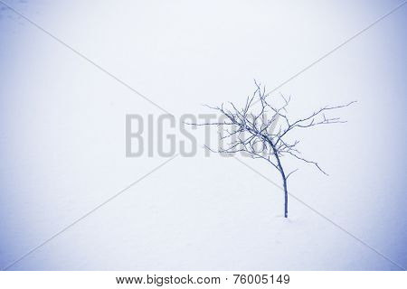 branch on snow covered ice