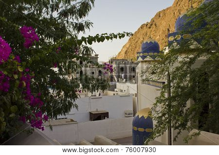 Muscat Homes through flowers