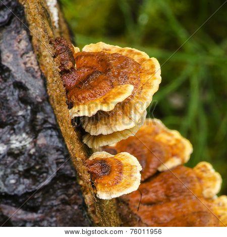 Mushrooms 2