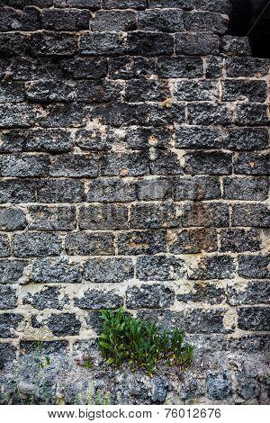 Brick Masonry With Green Dandelion Leaves Underneath