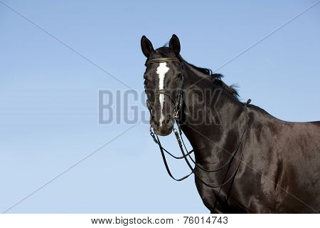 Black Horse In Front Of Blue Sky