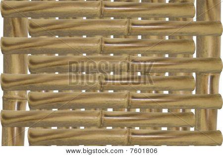 Sturdy Bamboo Stalk