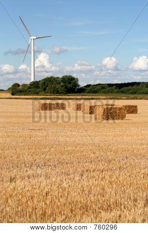 Wind Turbine and Wheat Field, Denmark