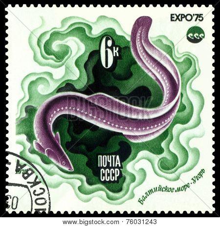 Vintage  Postage Stamp.  Eel.