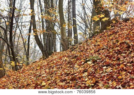 Steep Slope In The Autumn Forest