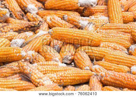 Pile Of Corns For Animal Feeding
