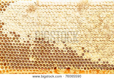Fresh Honeycomb Textured Background