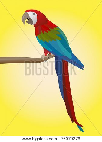 colorful parrot on yellow background - vector illustration
