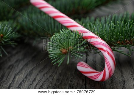 Candy Cane On Spruce Twig