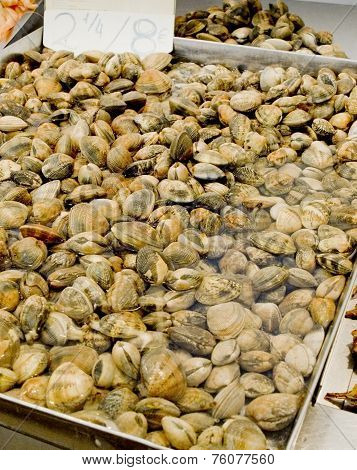 Clams In A Market.