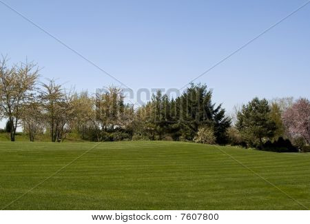 perfect lawn