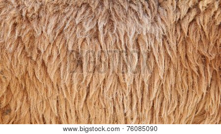 Brown Sheepskin Background