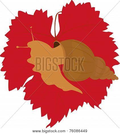 snail on grape leaf