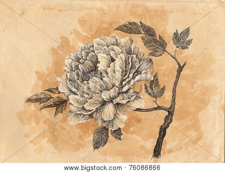Drawn By Hand Card, Peony Flower