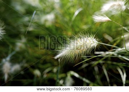 Background created with feather grass close up