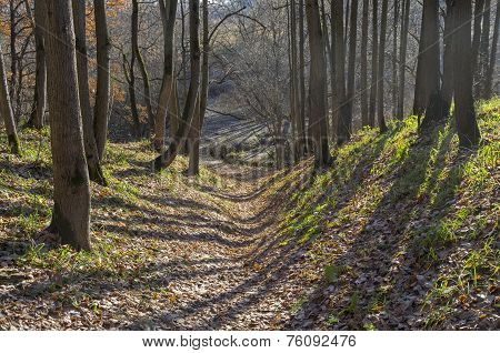 Small Ravine In The Autumn Forest.