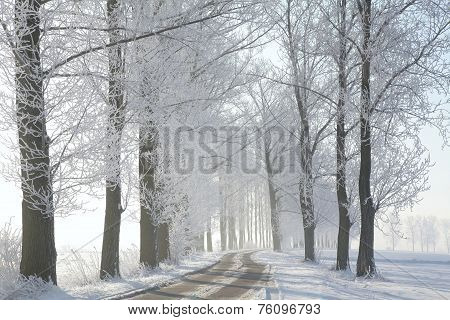 Winter rural road at dawn