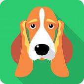 pic of basset hound  - Vector dog Basset Hound icon flat design - JPG