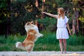 pic of collie  - Young beautiful girl in white dress playing with her dog collie on a background of forest - JPG