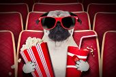 pic of pug  - dog watching a movie in a cinema theater with soda and popcorn wearing glasses - JPG