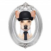 stock photo of border terrier  - terrier dog portrait of charlie chaplin within an old retro wooden frame isolated on white background - JPG