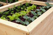 pic of turnip greens  - Close up of a vegetable garden with different vegetables - JPG