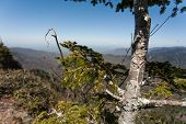 image of smoky mountain  - A heart carved into a small pine tree with mountains in the background - JPG