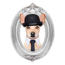 picture of border terrier  - terrier dog portrait of charlie chaplin within an old retro wooden frame isolated on white background - JPG