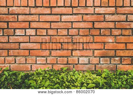 brick texture and bush background