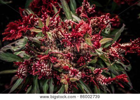 red flower pollen