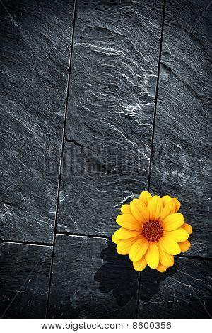 Black Schist Flower