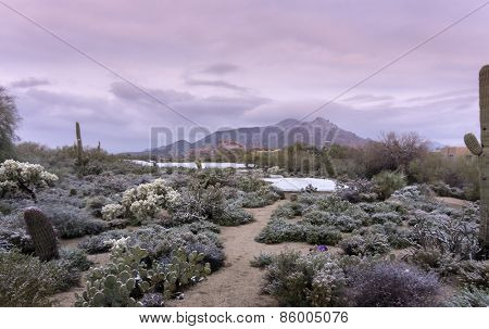 Early morning landscape scene of unusual desert winter snow scene in Scottsdale,Az,USA