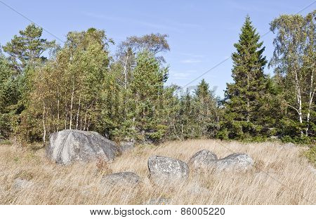 Rocks, grass, bushes and trees on the shore.