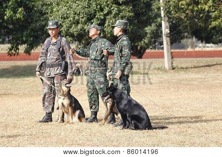 Training Dogs Of War