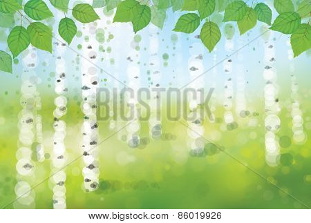 Vector birch forest.