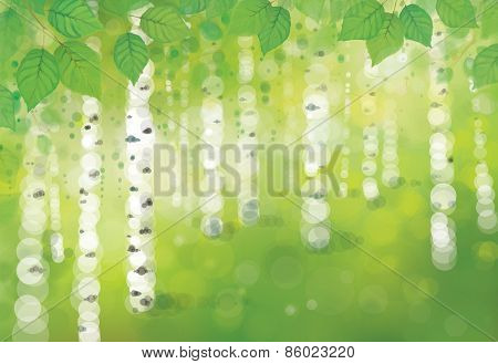 Vector birches forest.