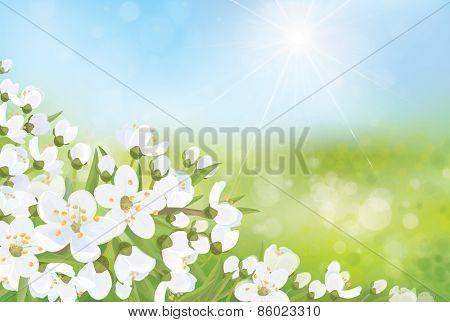 Vector spring  background.