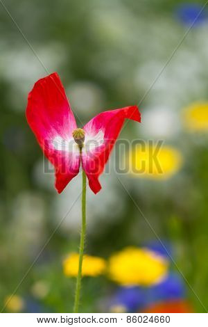 Lonely red flower in the garden with yellow flowers in the background