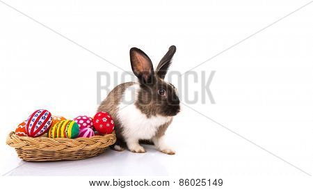 Rabbit with Easter eggs isolated on white background