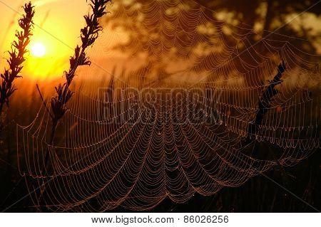 Web In The Light Of The Rising Sun